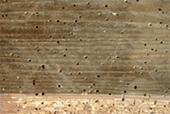 Traitement des bois et charpentes contre les larves du for Produit traitement petite vrillette